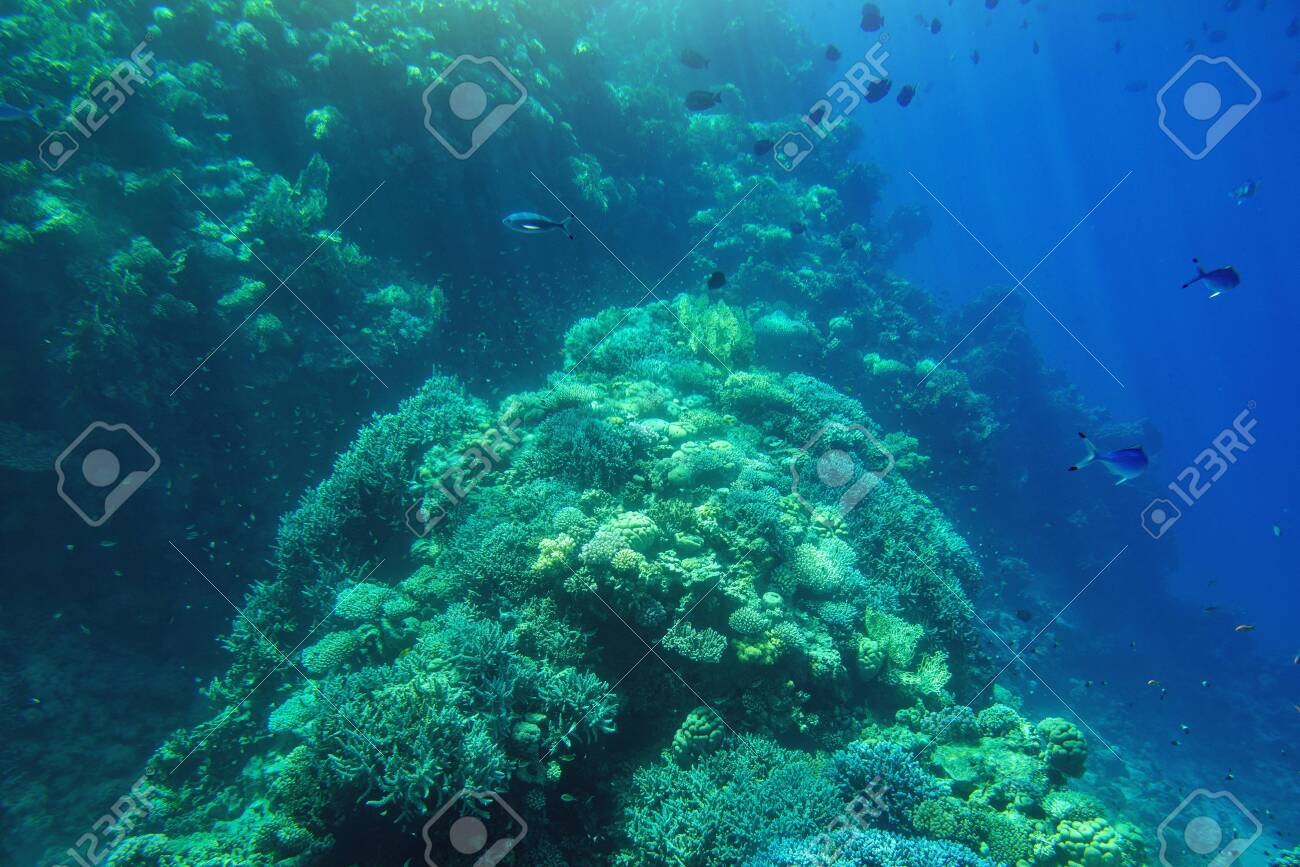 Aquatic Deep Blue Seabed Underwater Background Stock Photo 1300x867