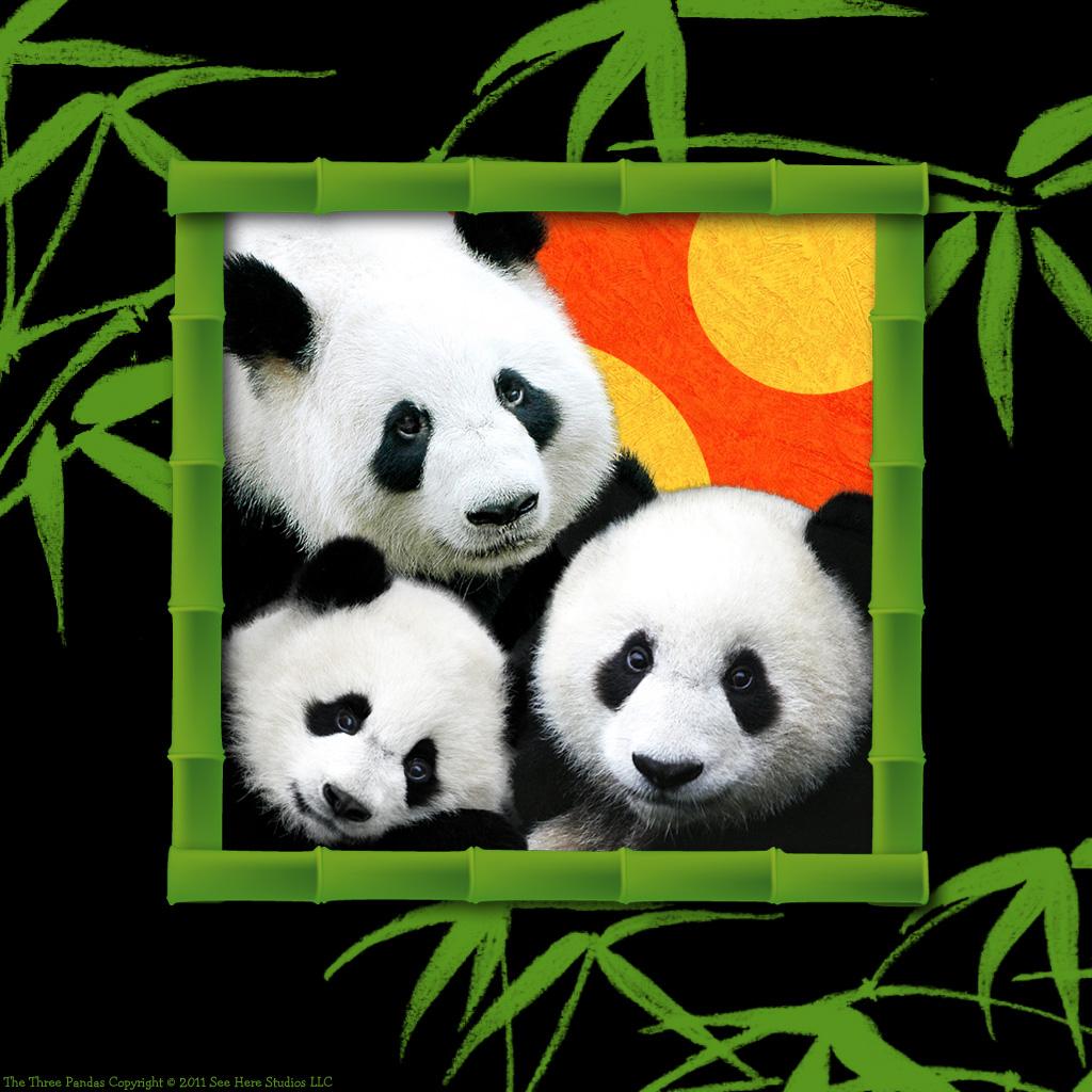 Cute Cartoon Panda Wallpaper 6057 Hd Wallpapers Background in Cute 1024x1024