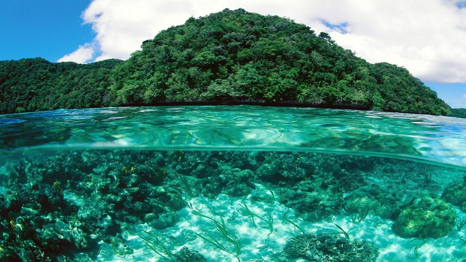 Free underwater wallpapers for desktop wallpapersafari - Underwater wallpaper for pc ...
