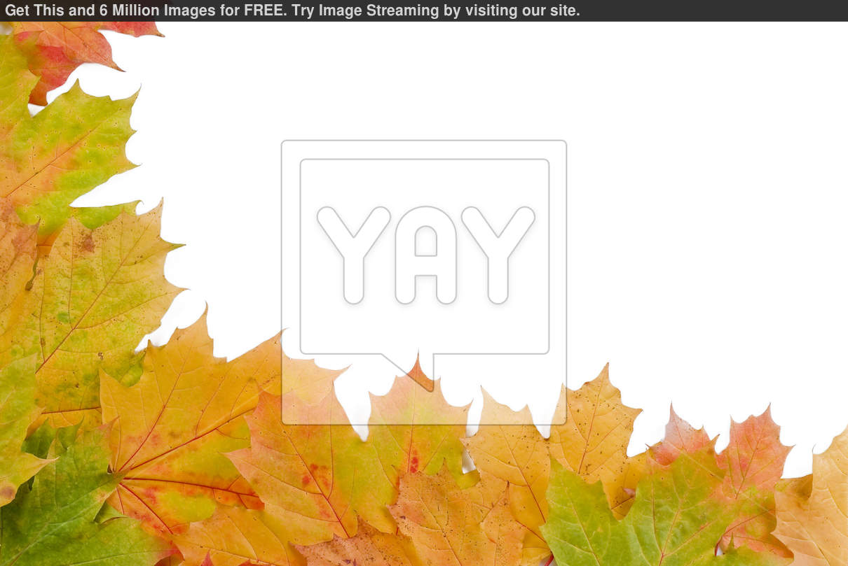 Autumn Leaves Wallpaper Border Save money   get images for 1210x809
