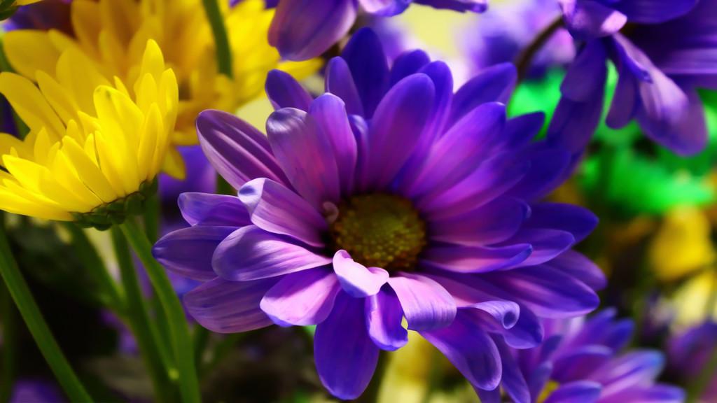 Flowers HD Desktop Wallpaper 1443 Full Size hdewallpapercom 1024x576