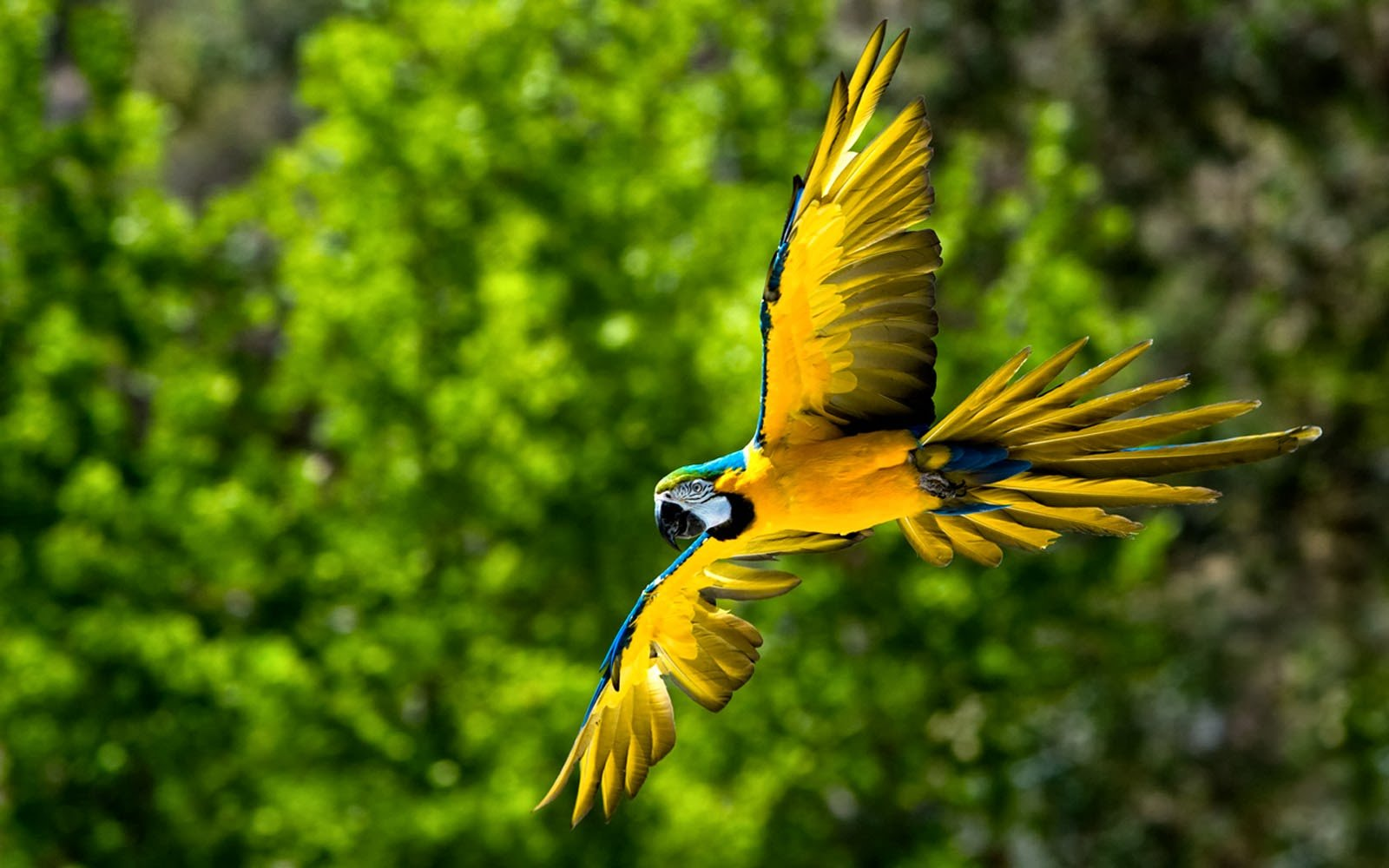 wallpapers Macaw Bird Wallpapers 1600x1000