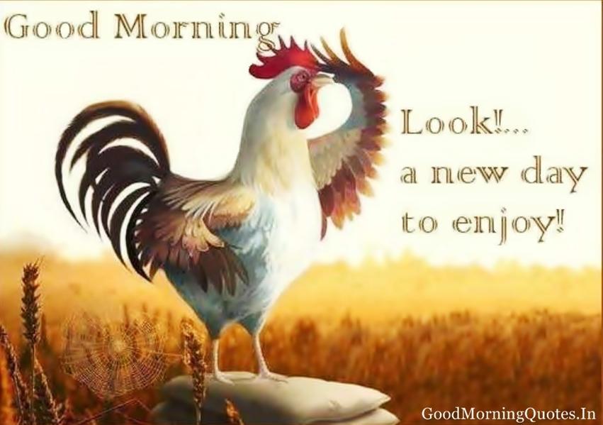 Cute Good Morning Wallpaper Wallpapersafari