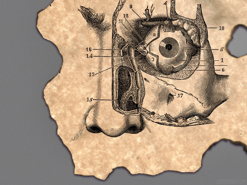 Free Download Anatomy Human Body Art Face 1600x1200 Wallpaper Body Wallpaper 800x600 For Your Desktop Mobile Tablet Explore 44 Human Body Wallpaper Human Anatomy Wallpaper