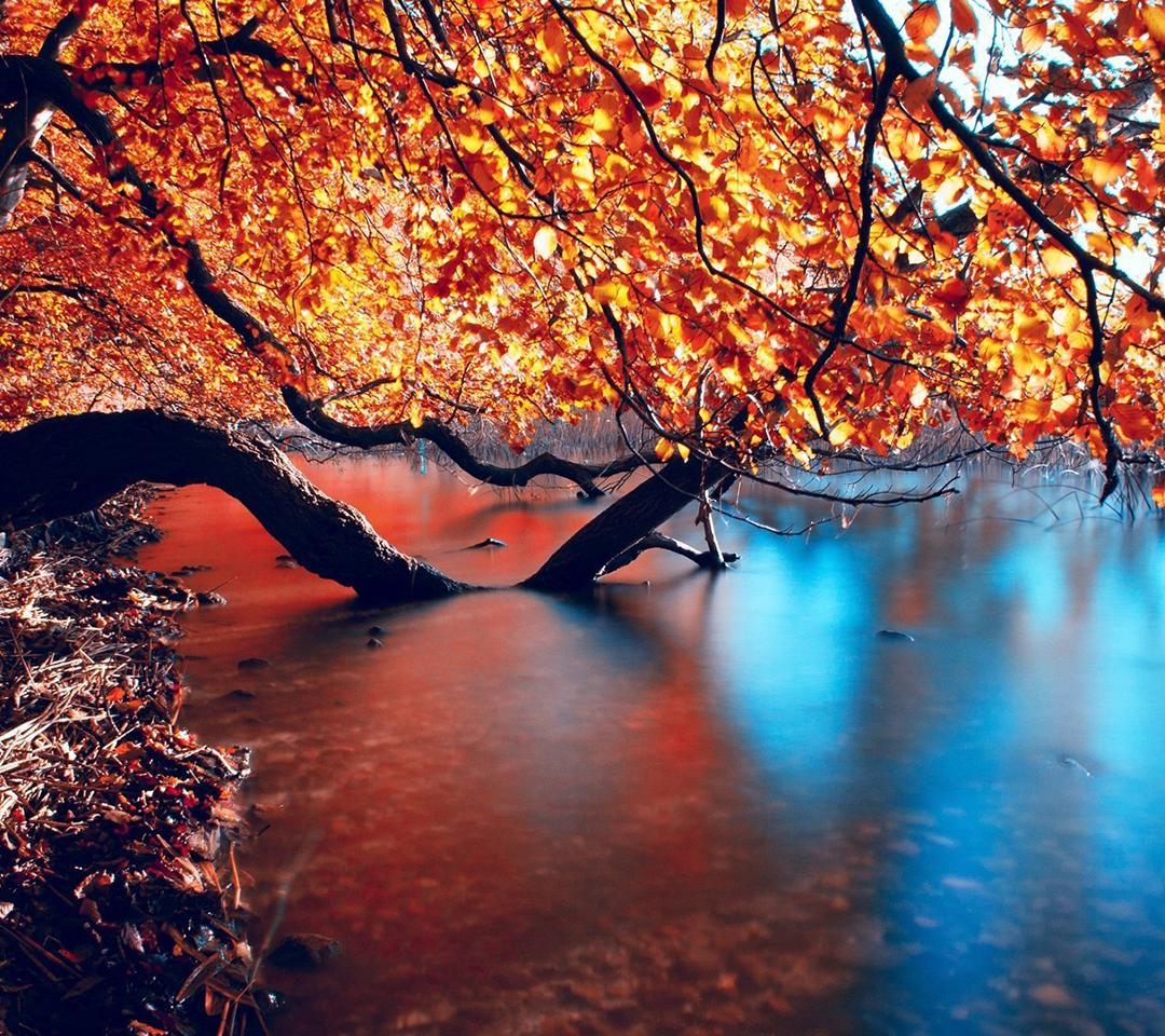 Qhd Phone Wallpapers Wallpapersafari HD Wallpapers Download Free Images Wallpaper [1000image.com]