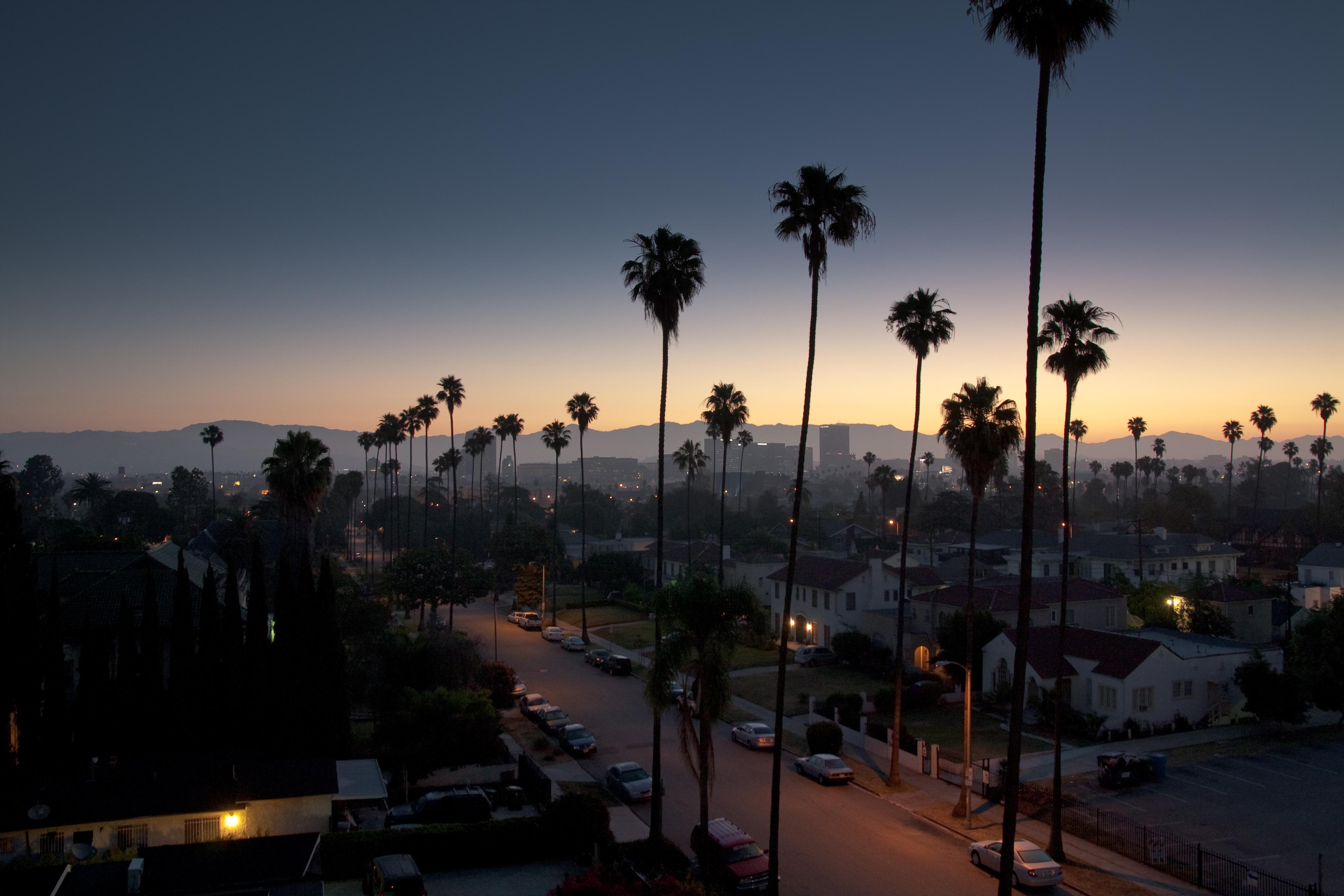 california los angeles street palms wallpaper   bullshft   oh my god 4272x2848