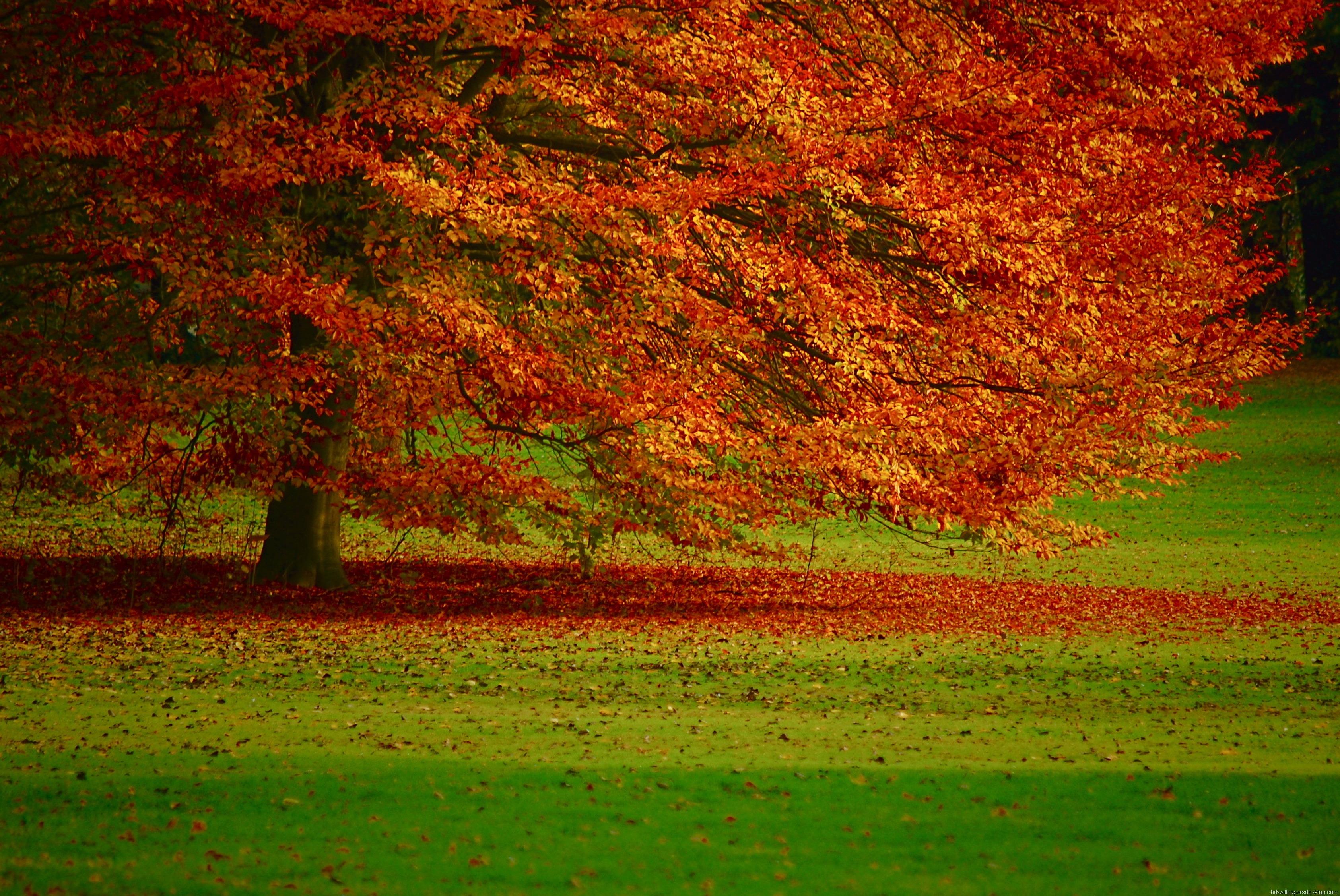 Nature Hd Desktop Wallpaper