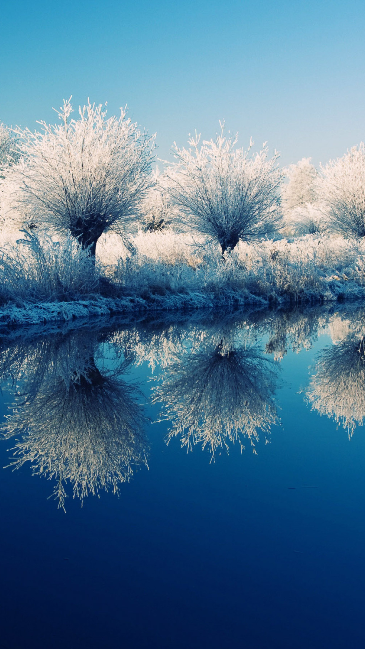 trees on the edge of the lake   beautiful mirror 1242x2208 Download 1242x2208
