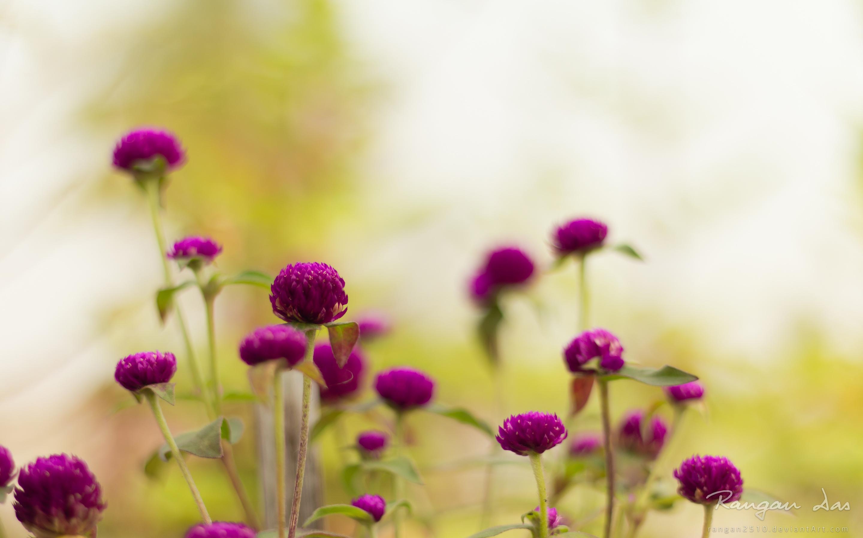 Purple Garden Flowers Wallpapers HD Wallpapers 2880x1800