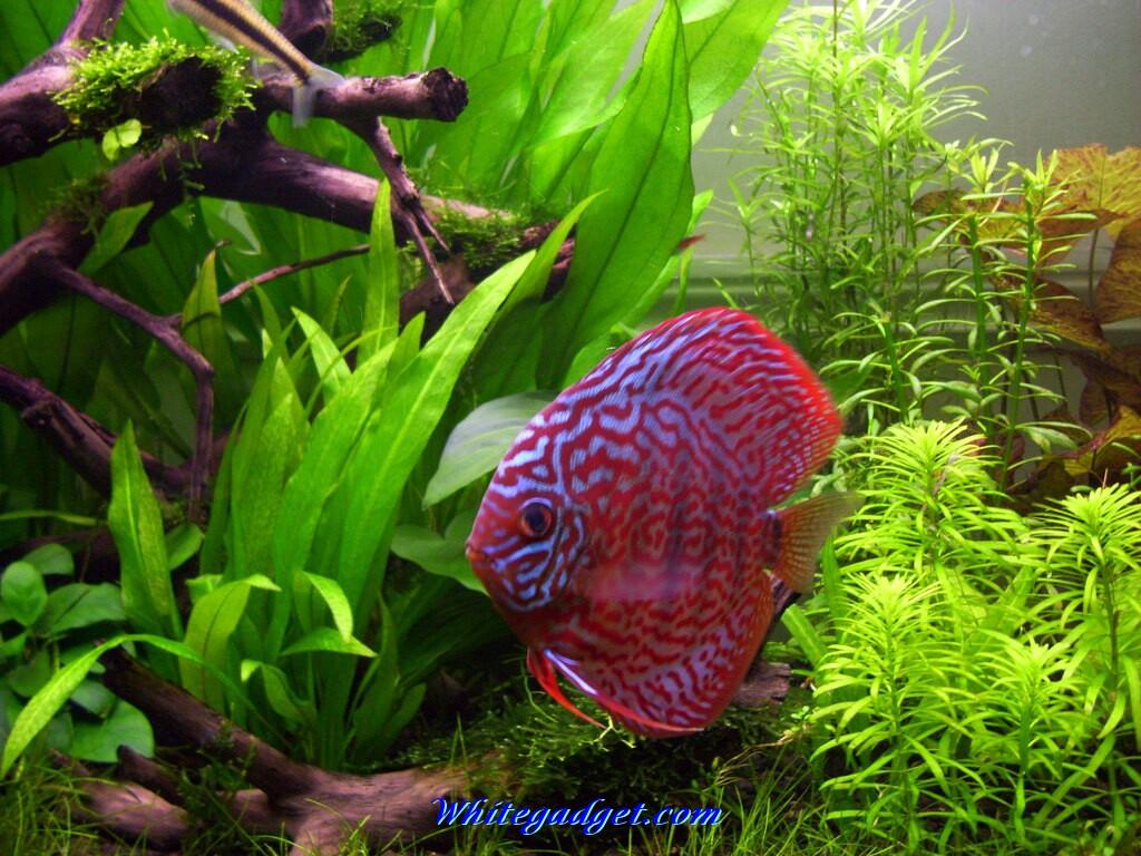 Live tropical fish wallpaper wallpapersafari for 3d fish tank