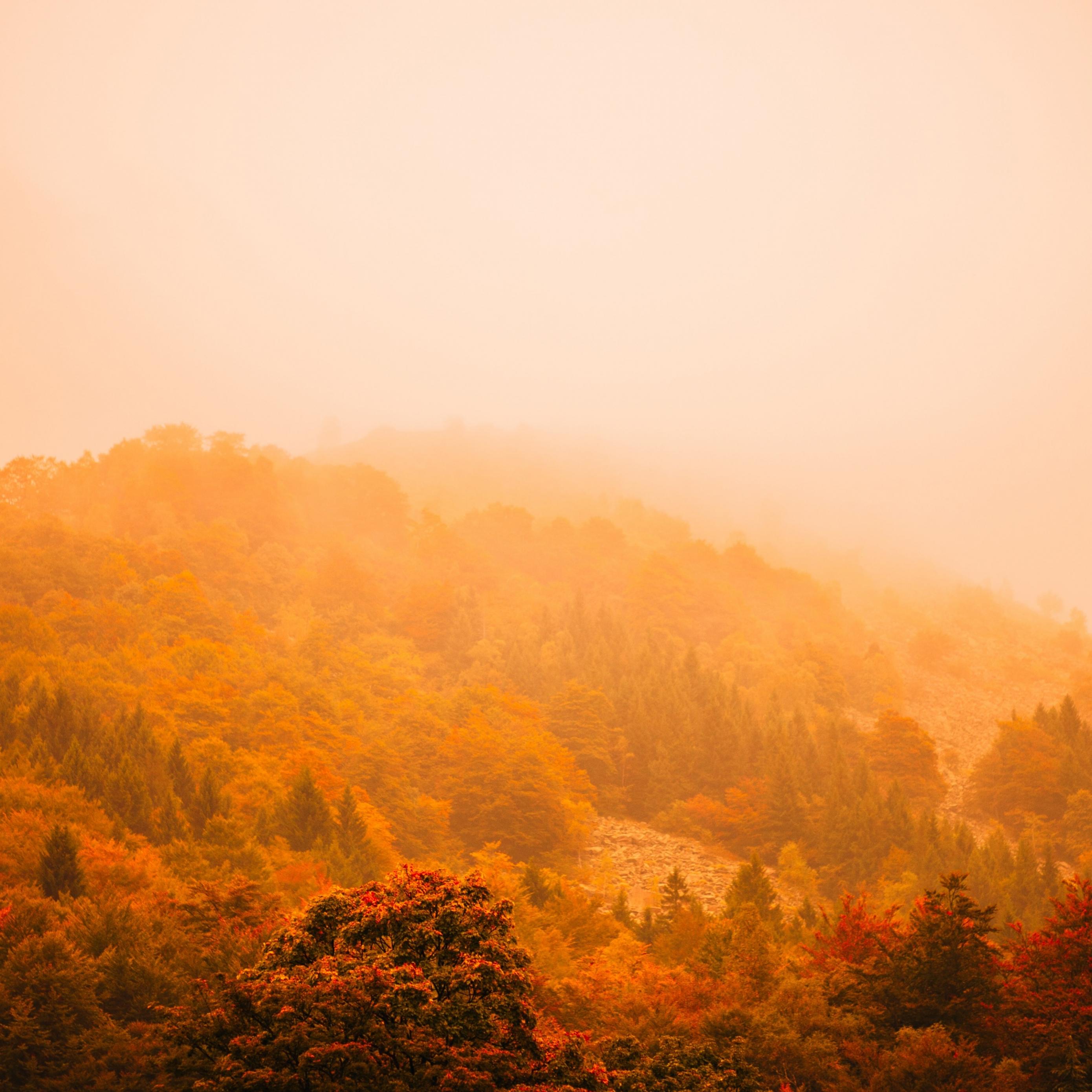 Download fog autumn forest mountain 5k 22856 Apple iPad Air 2780x2780