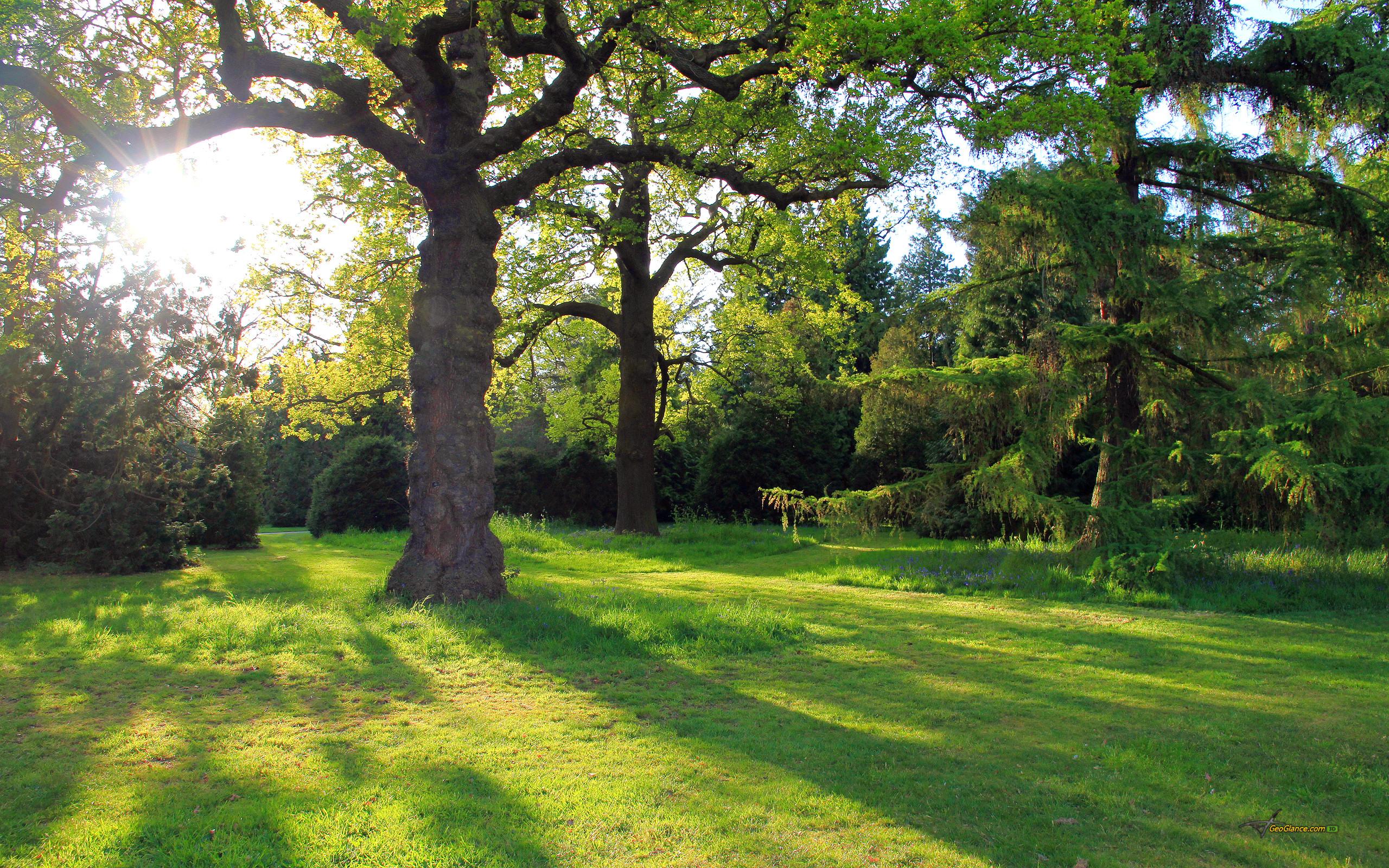 деревья на поляне  № 2050688  скачать
