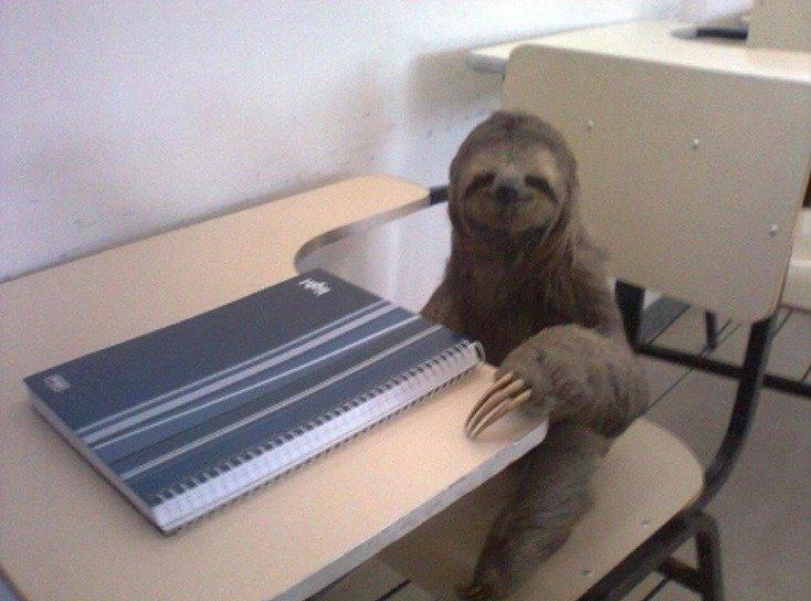 Sloths desks humor funny 734x544