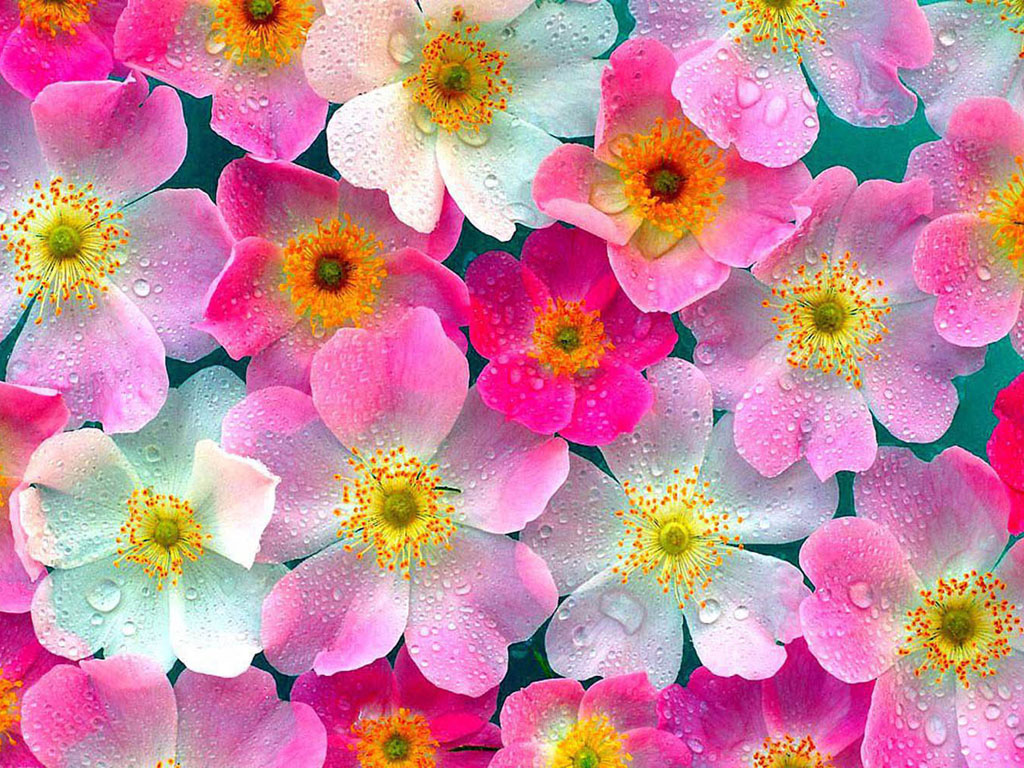 wallpaper Flowers Wallpapers 1024x768
