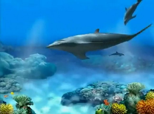 Dolphin Aqua Life Screensaver Software - Free Download ...
