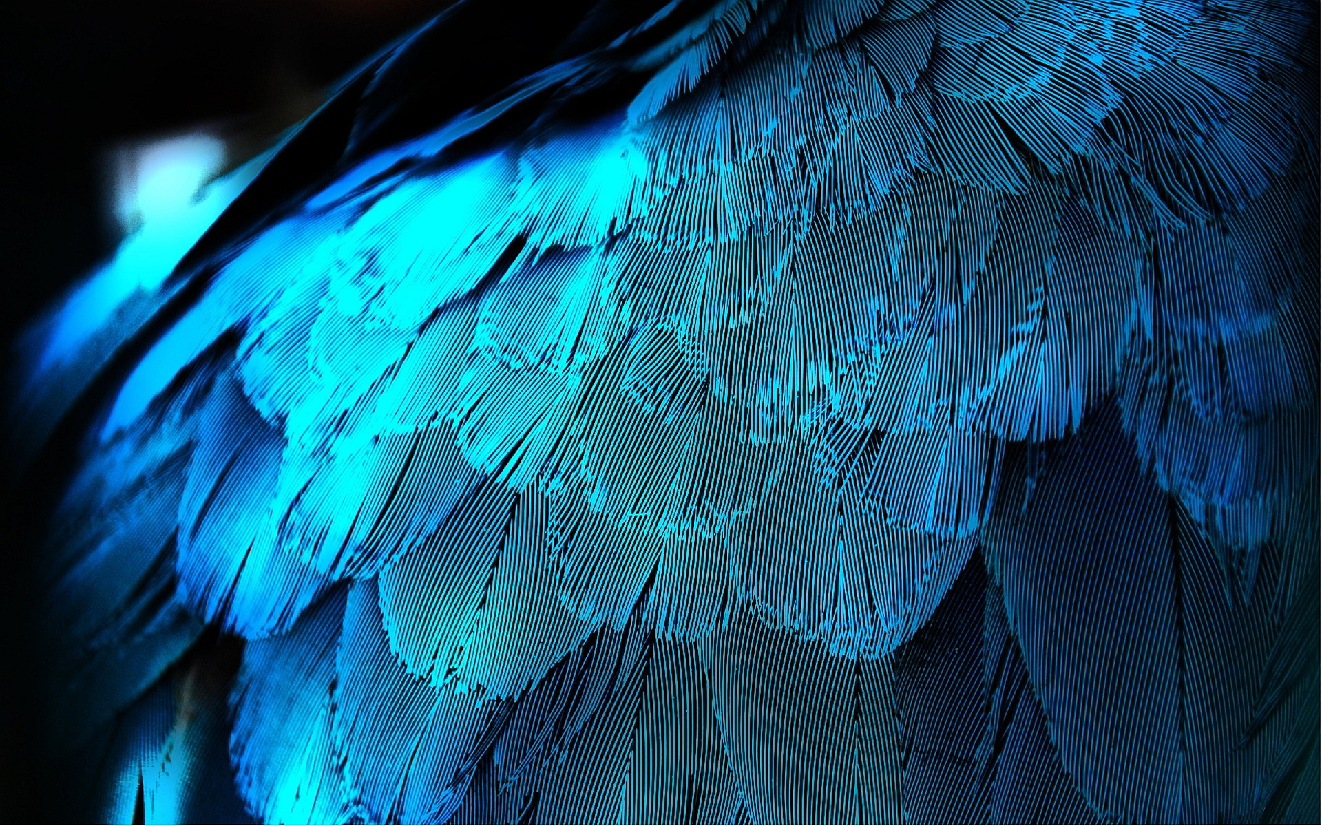 Blue feather wallpaper 1920x1200 11898 1920x1200