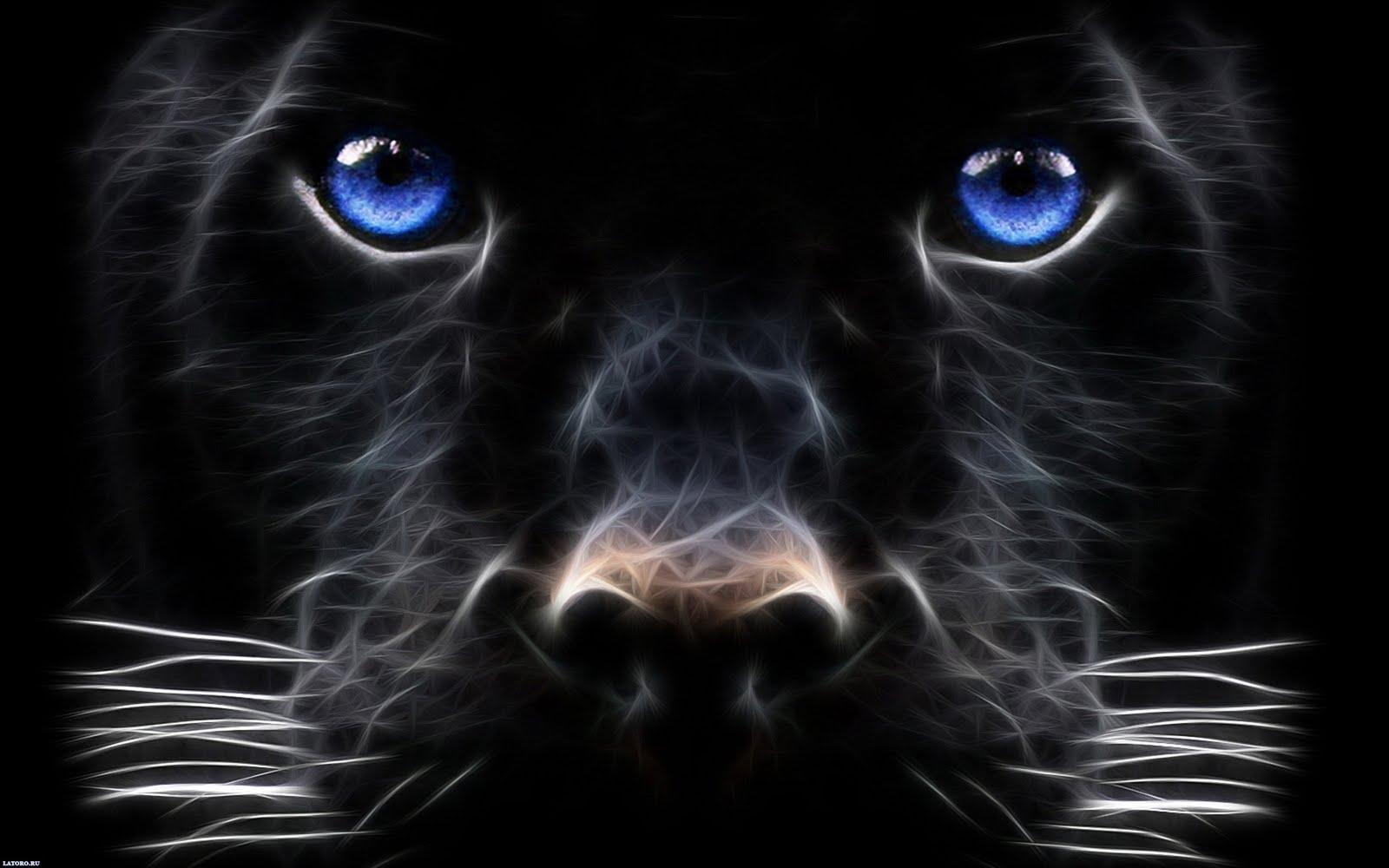 Unique Animals blogs Black Dog Wallpapers for Desktop 1600x1000