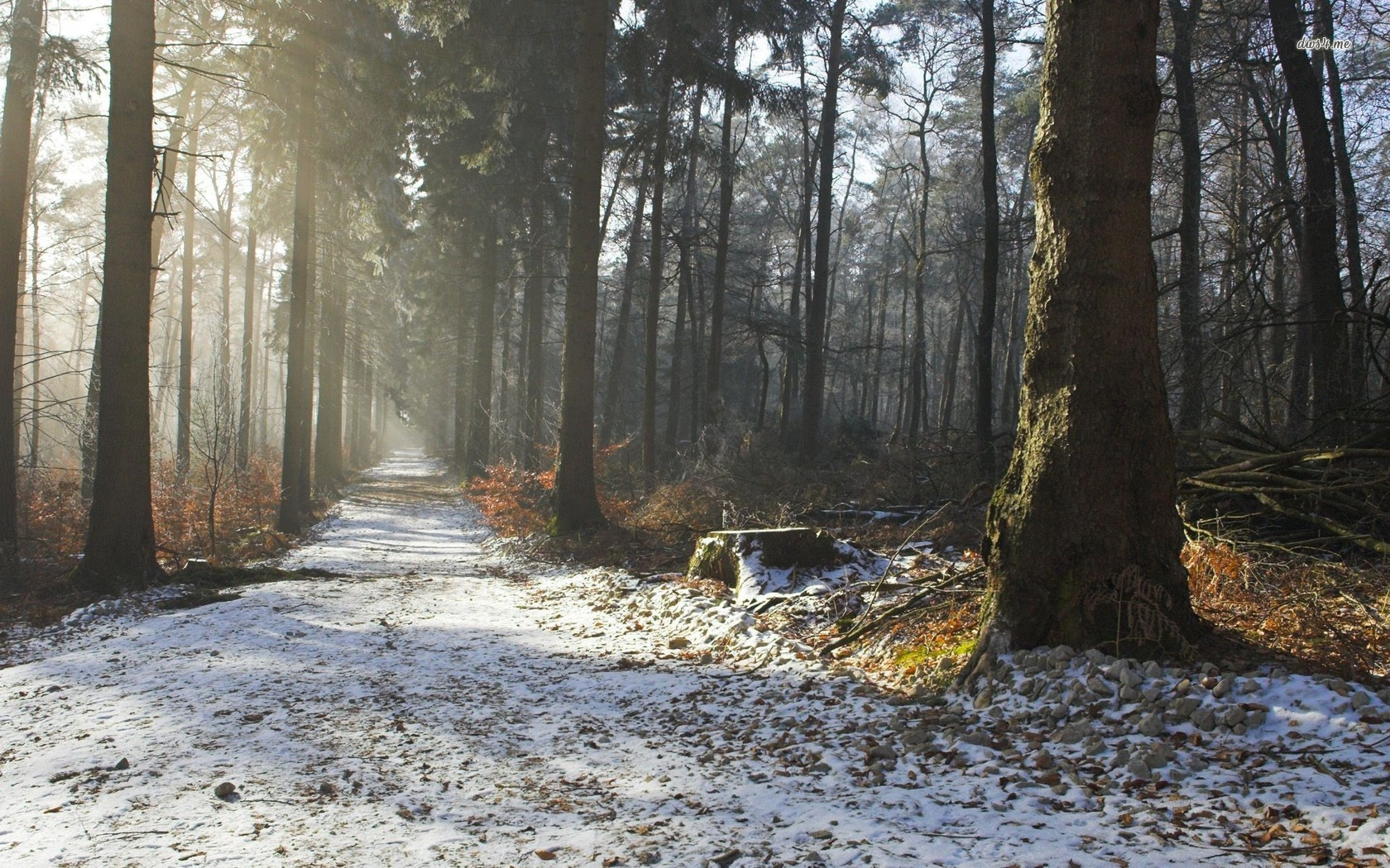 Snowy forest trail wallpaper   Nature wallpapers   18328 1680x1050