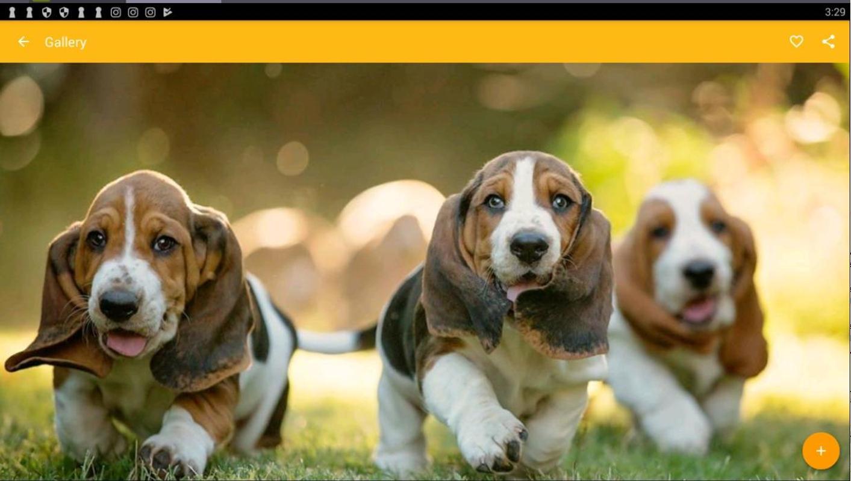 Its A Hound Dog wallpaper 1413x800