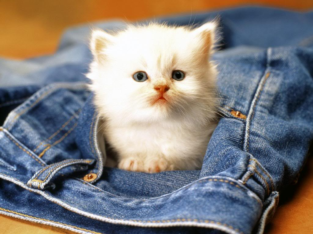 Funny Animals Zone Cute Baby Animals Wallpapers 1024x768
