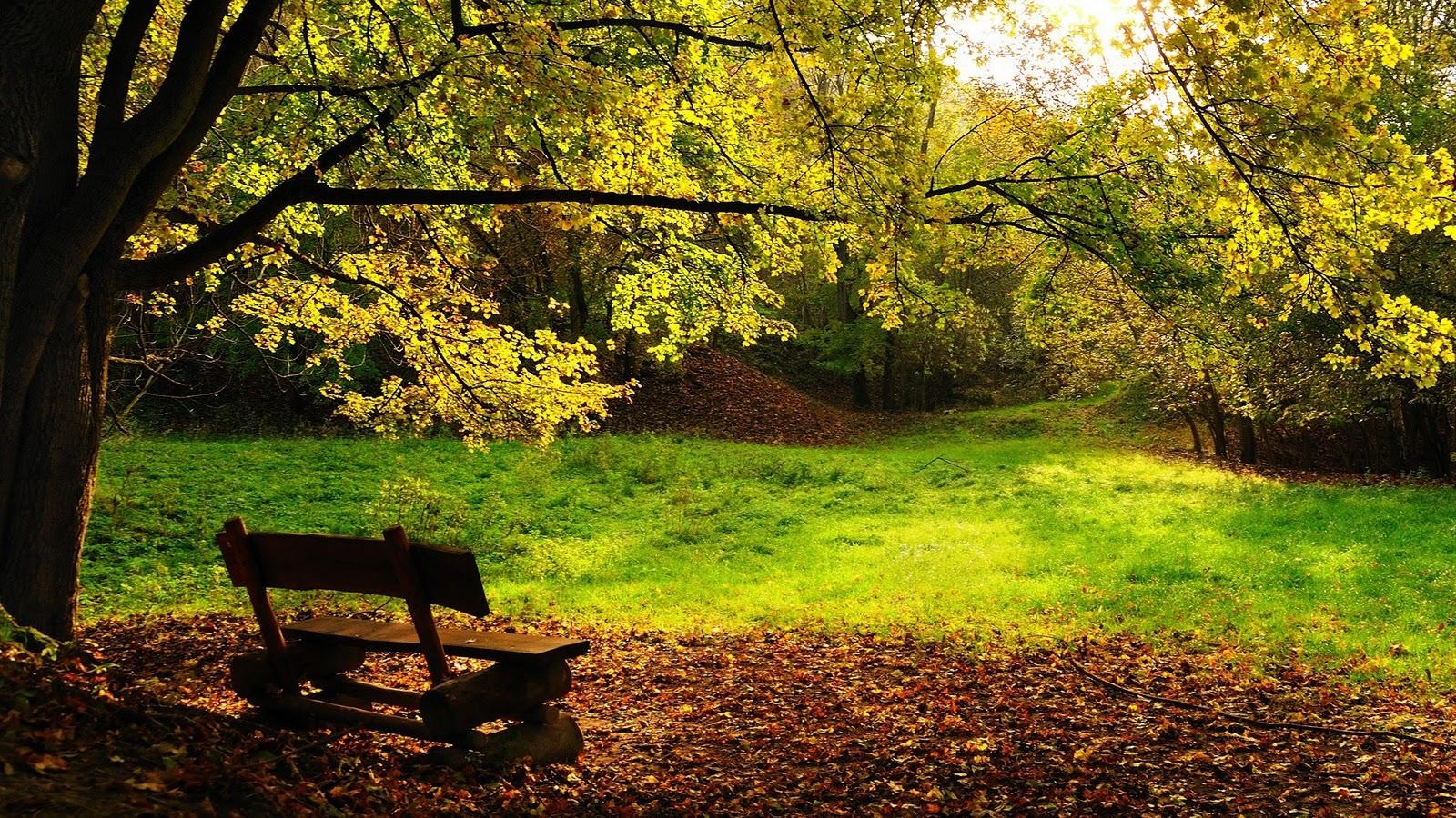 autumn desktop wallpaper hd   wwwwallpapers in hdcom 1600x900