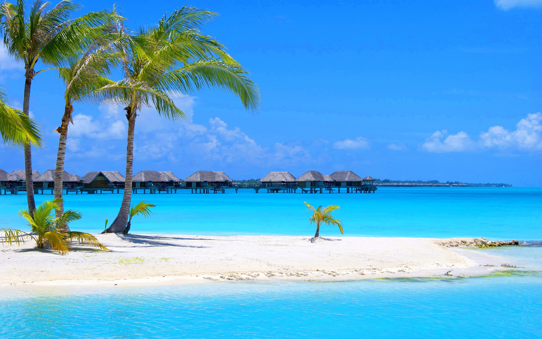 Blue Beach Palm Tree Wallpaper HD Desktop 456289 2880x1800