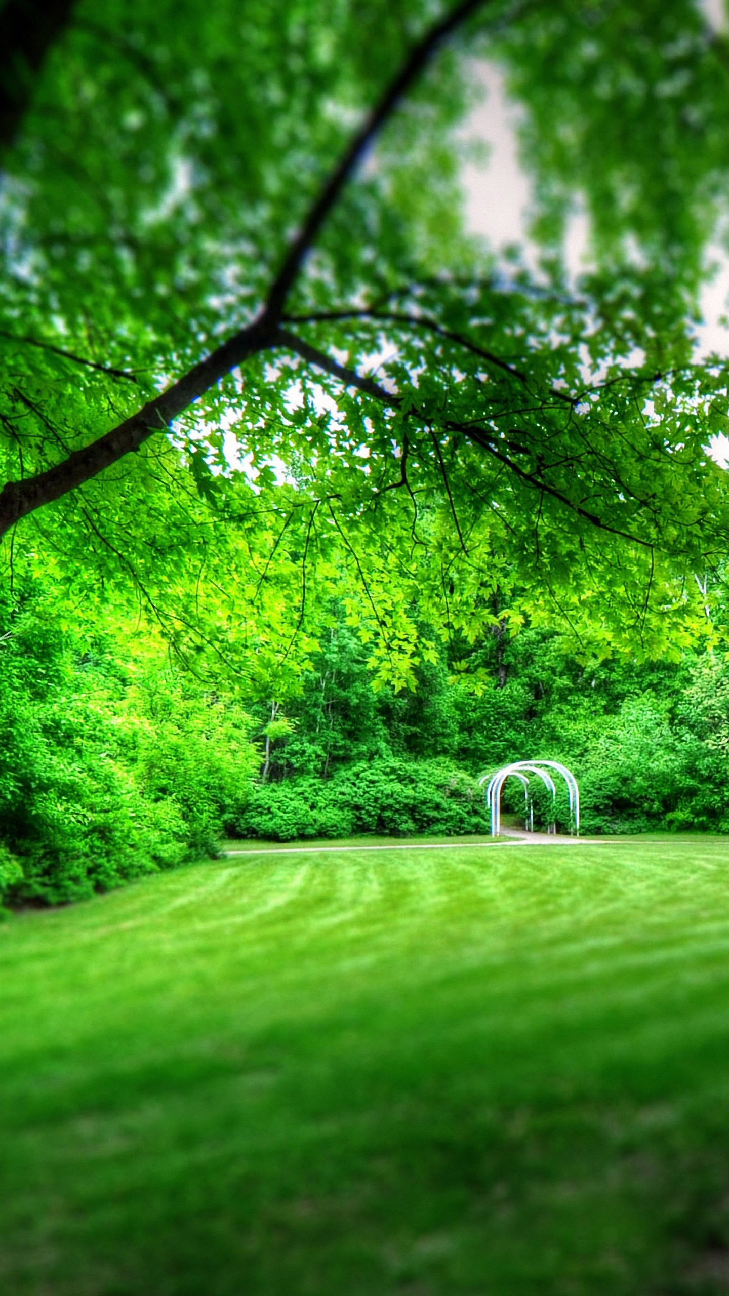 Free Download Download Park Scenery Wallpaper For Nokia Lumia