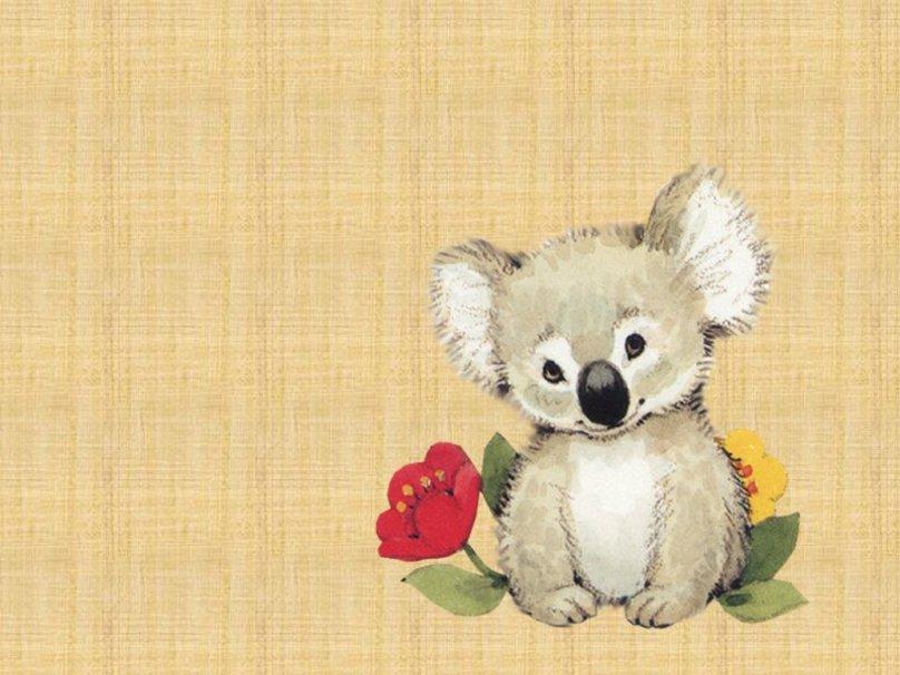 Koala wallpaper   ForWallpapercom 808x606