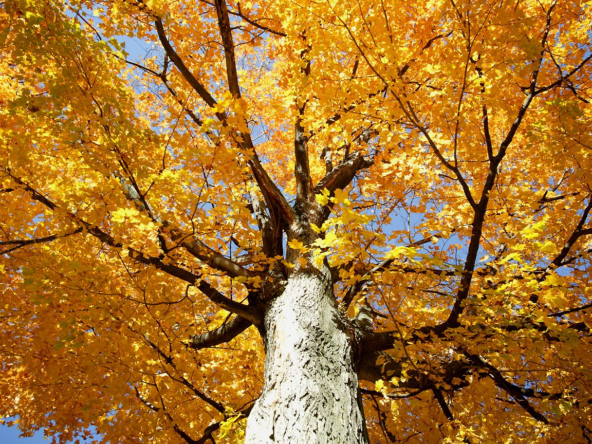photographed in October of 2003 at Devils Lake Wisconsin using a 1152x864