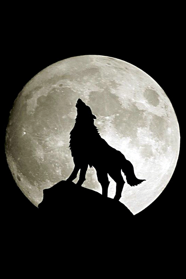 Howling Wolf iPhone Wallpaper Gallery Photo iPhone 640x960