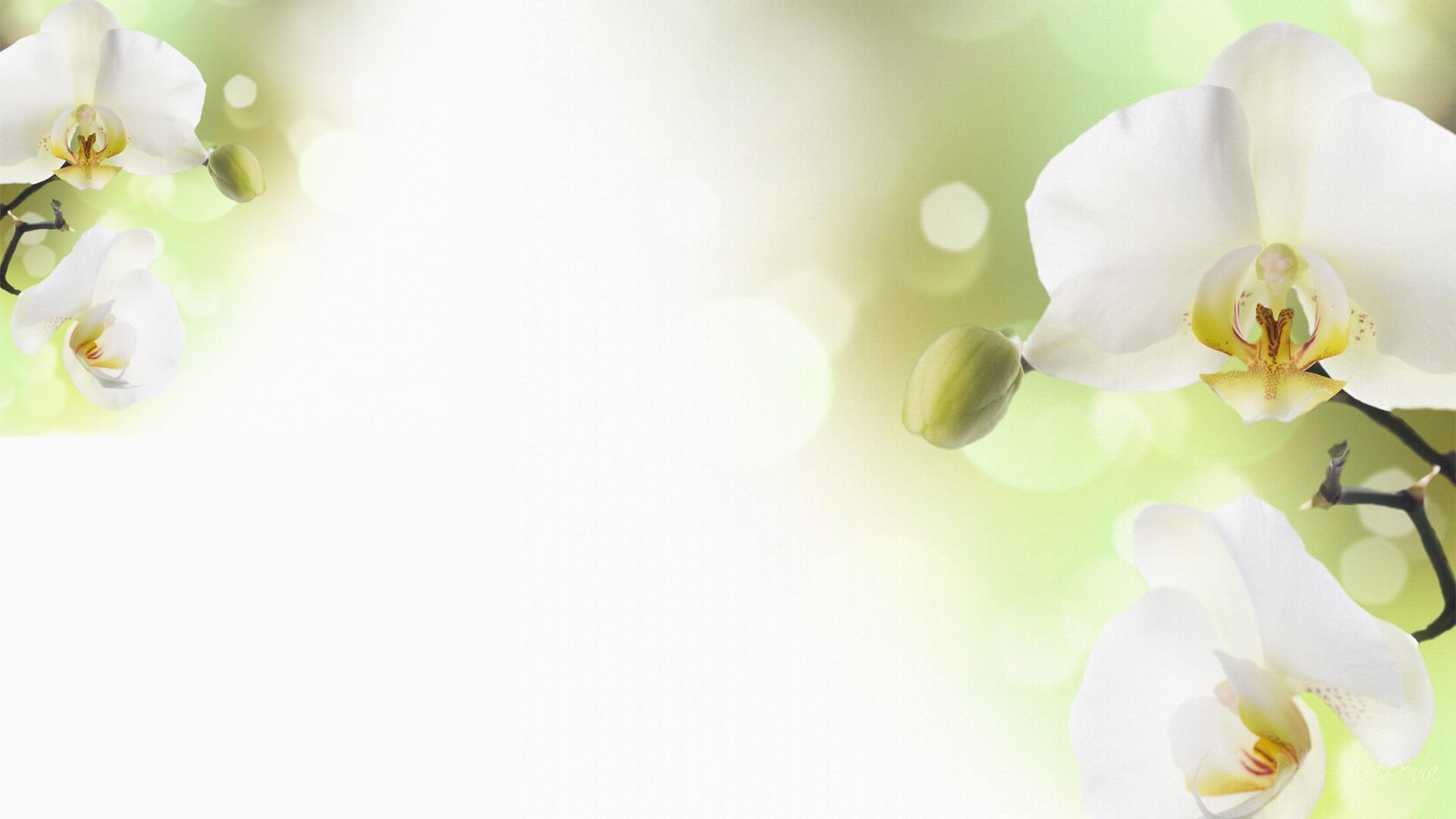 White orchid wallpaper wallpapersafari - White orchid flowers desktop wallpapers ...
