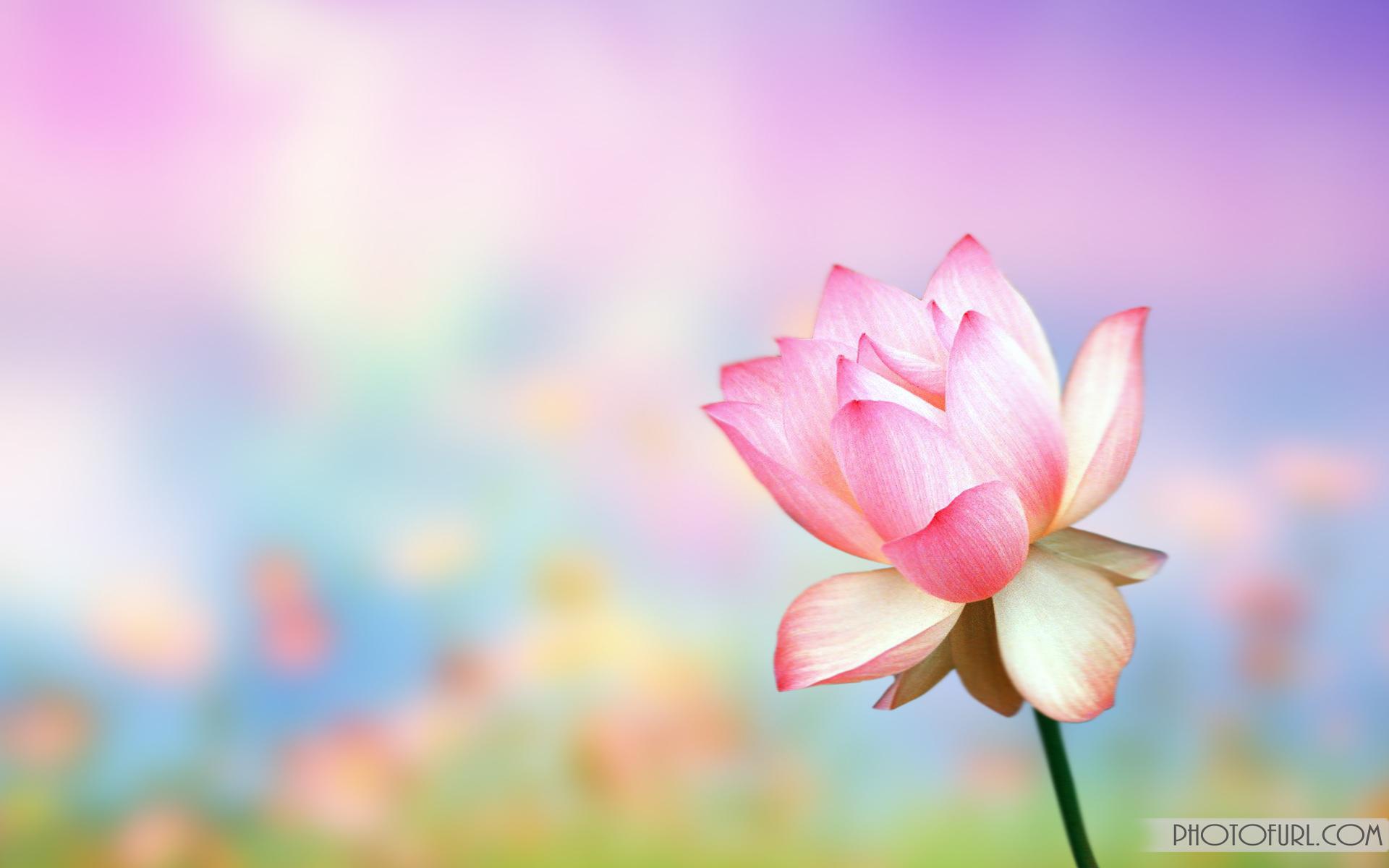 Background Images Flowers - WallpaperSafari