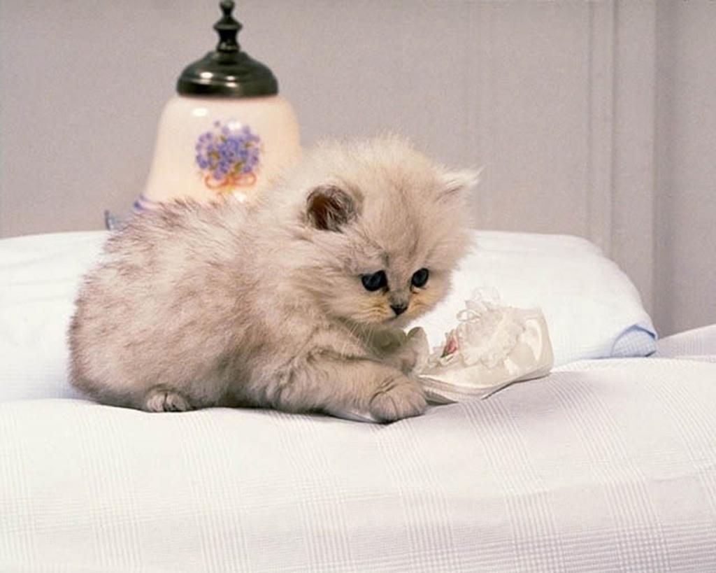 cute cat wallpaper Funny Animal 1024x819