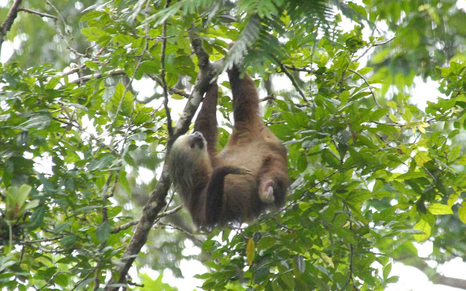 free wallpaper sloth wallpapersafari