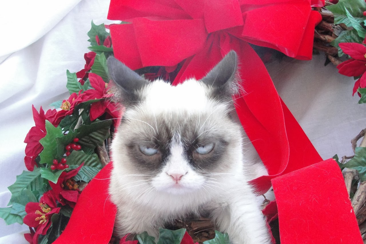 Top HD Wallpapers Grumpy cat christmas wallpapers 2013 1280x853