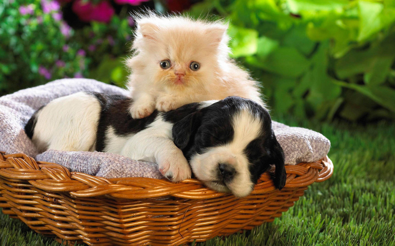 Kitten And Puppy Cute Animal Wallpaper Desktop 1375 Wallpaper 2880x1800