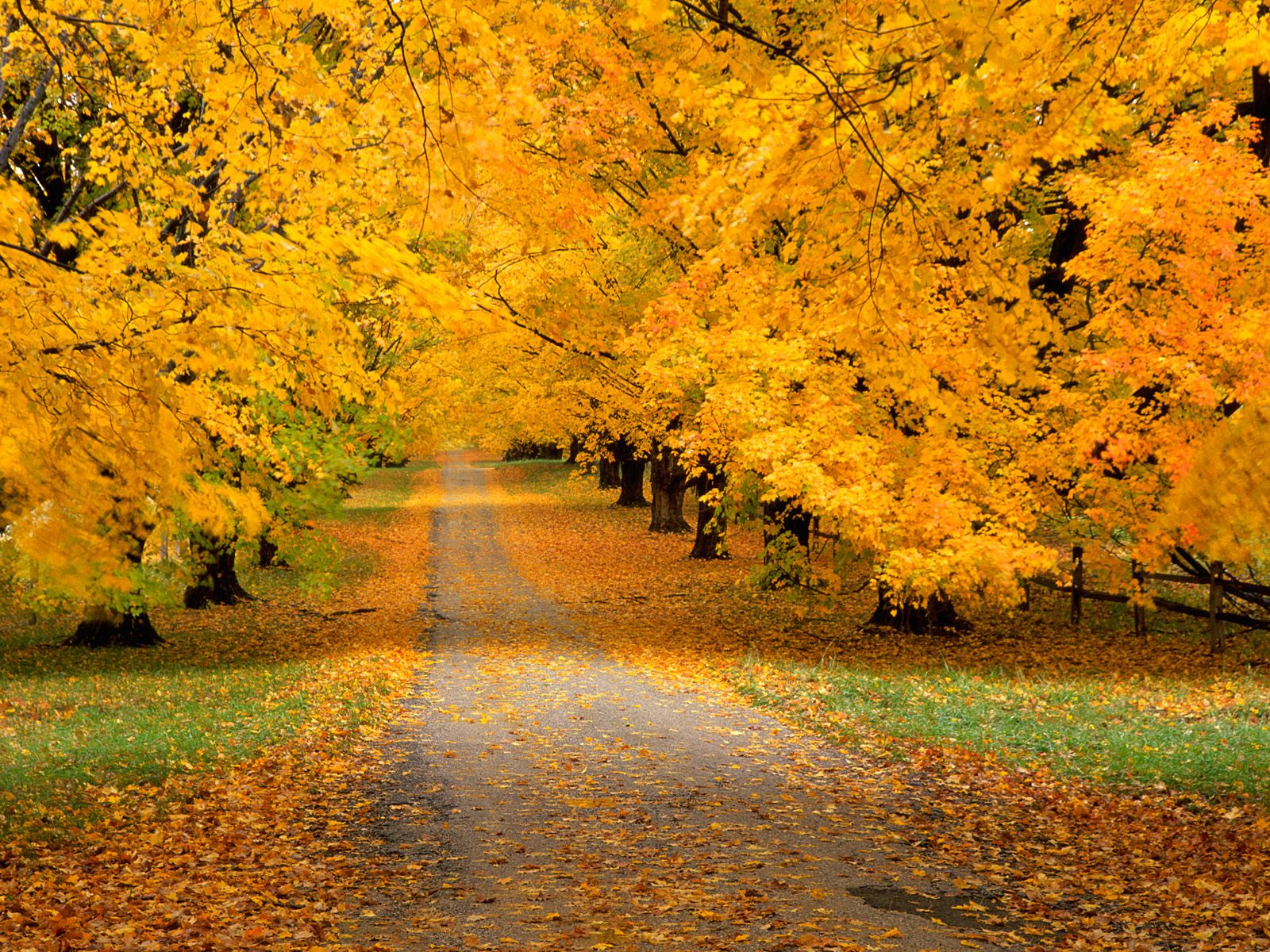 Autumn Covered Road   Cool Backgrounds and Wallpapers 1600x1200