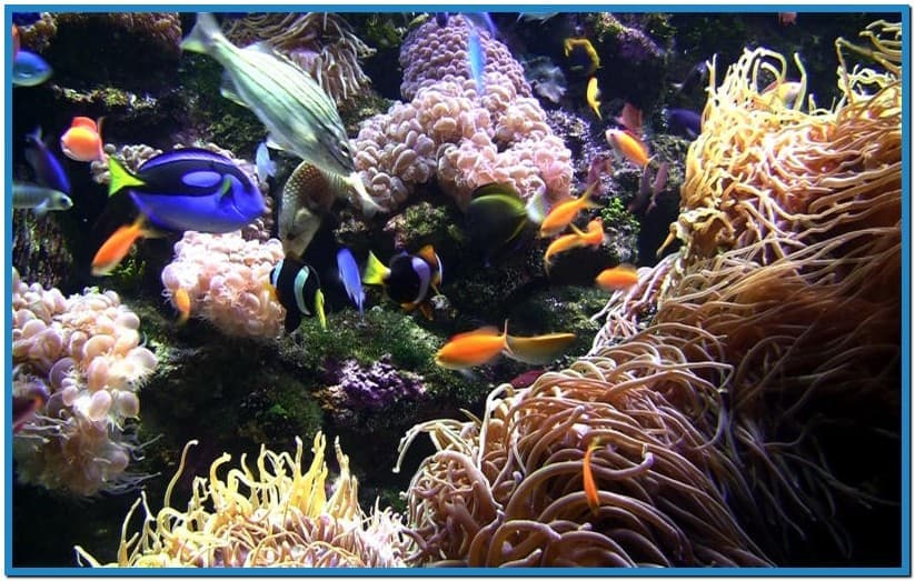Live aquarium screensaver mac   Download 823x523