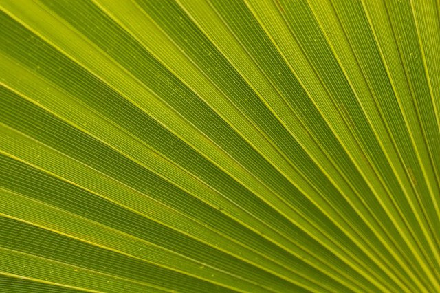 Palm Leaf Wall Art   Tropical   Wallpaper   by Murals Your Way 640x426