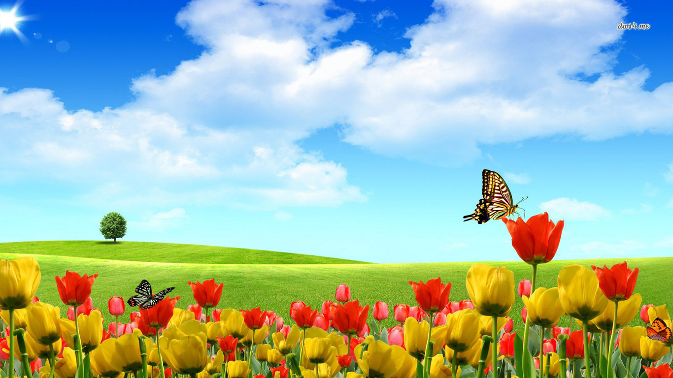Free download summer wallpaper summer nature desktop