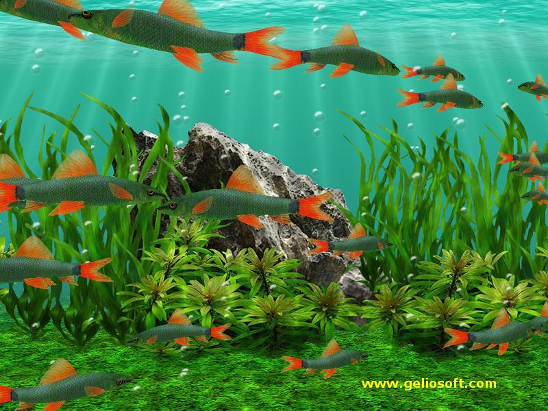 47 moving fish wallpaper free on wallpapersafari - Fish tank screensaver pc free ...