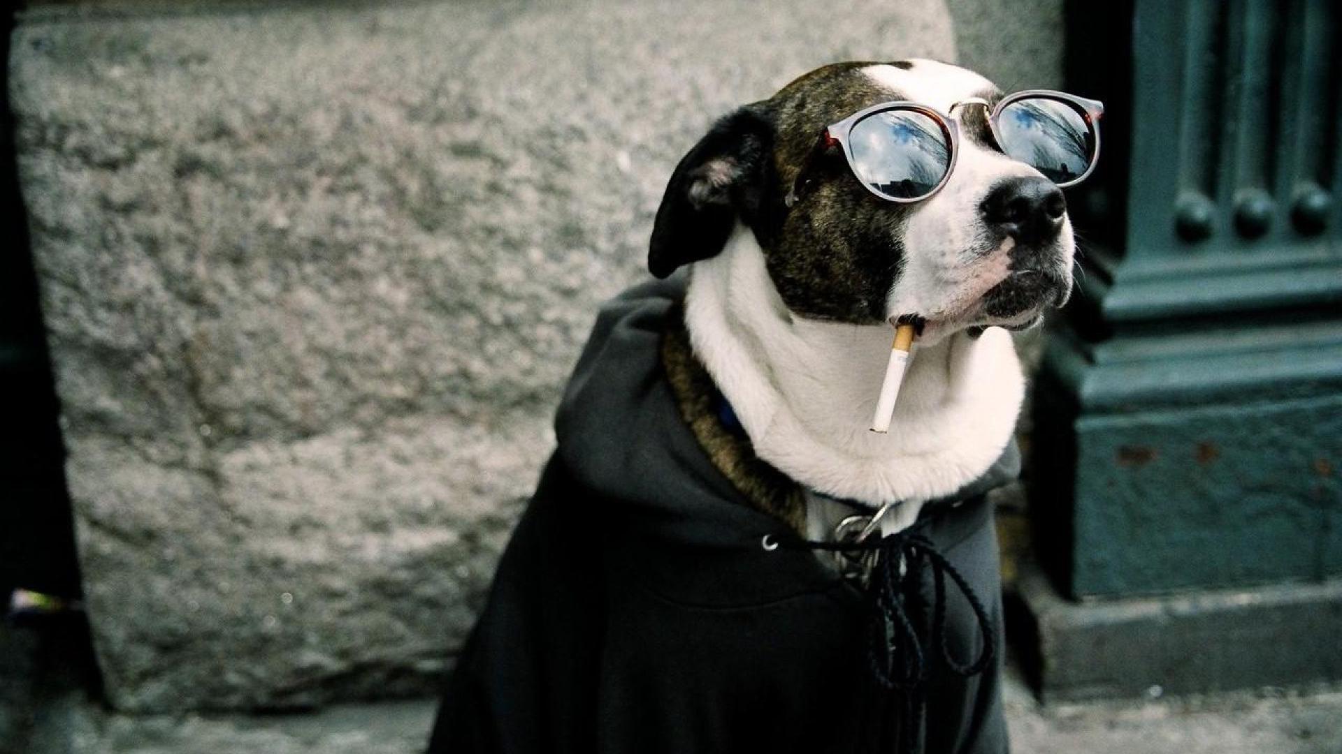 Dog Funny HD Wallpapers Download Desktop Wallpaper Images 1920x1080