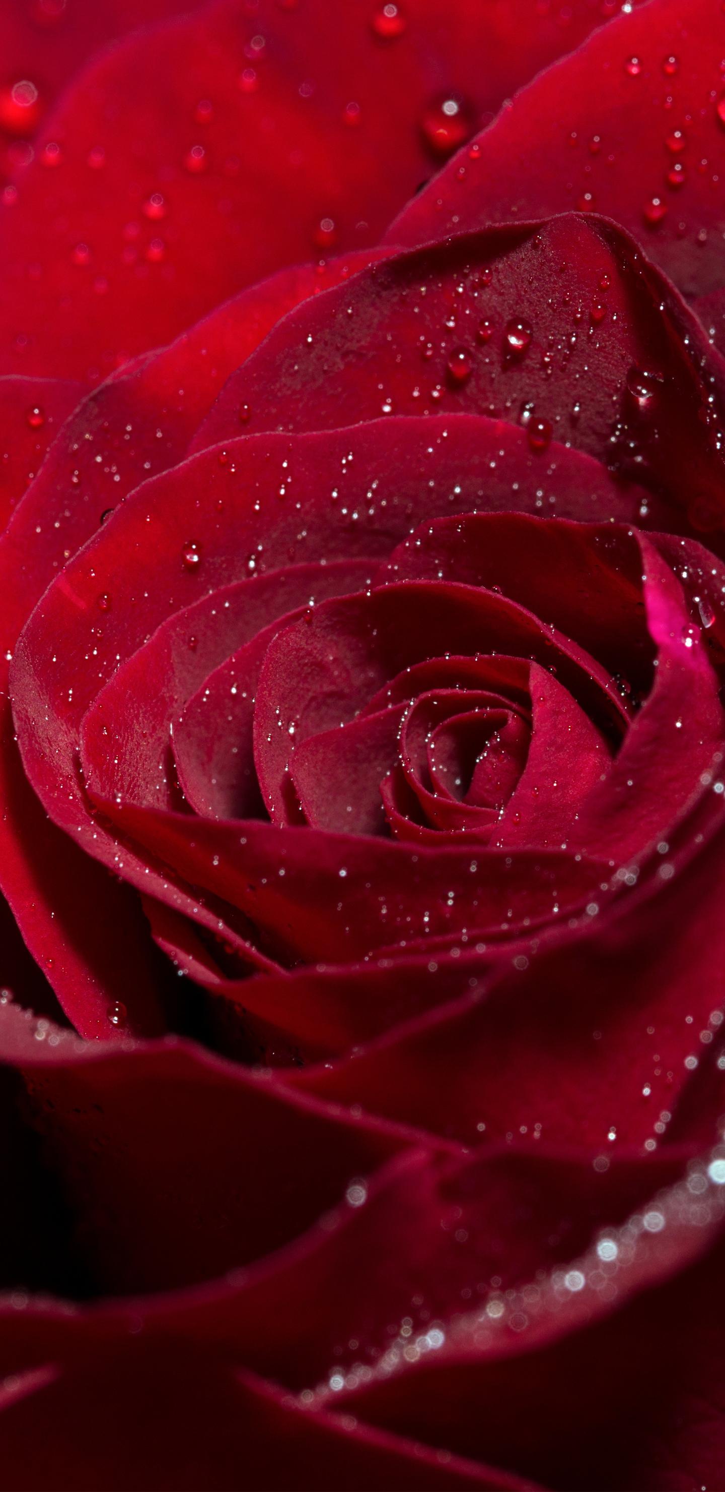 Samsung Galaxy Note8 Rose Wallpaper Gallery Yopriceville   High 1440x2960