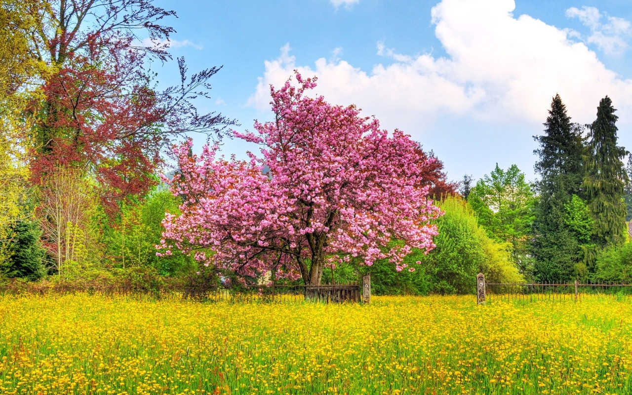 1280x800 Beautiful Spring desktop PC and Mac wallpaper 1280x800