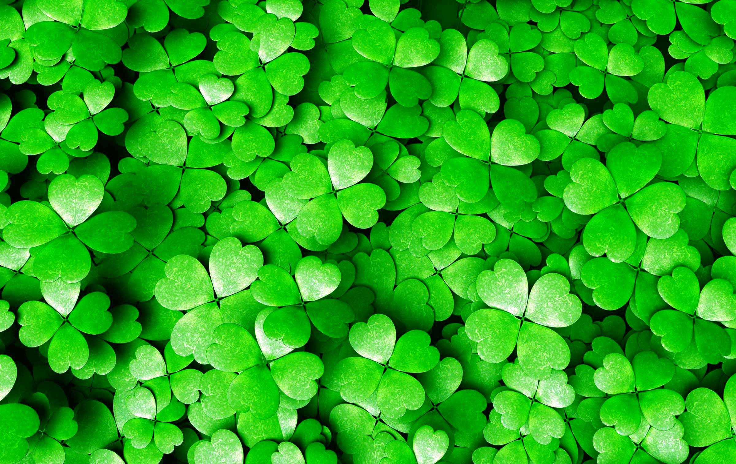 Saint Patricks Day Latest Photos HD 1080p 2400x1516