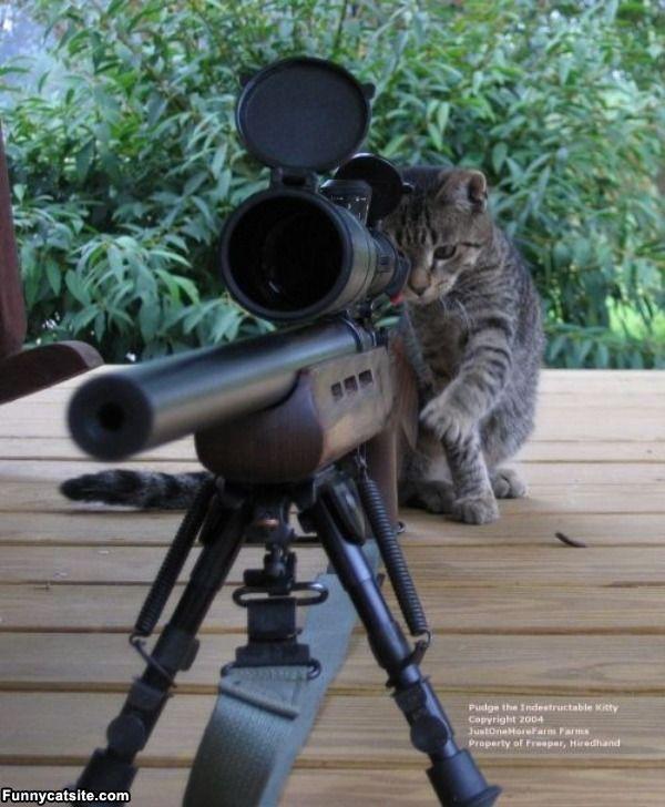 Sniper Cat   funnycatsitecom 600x728