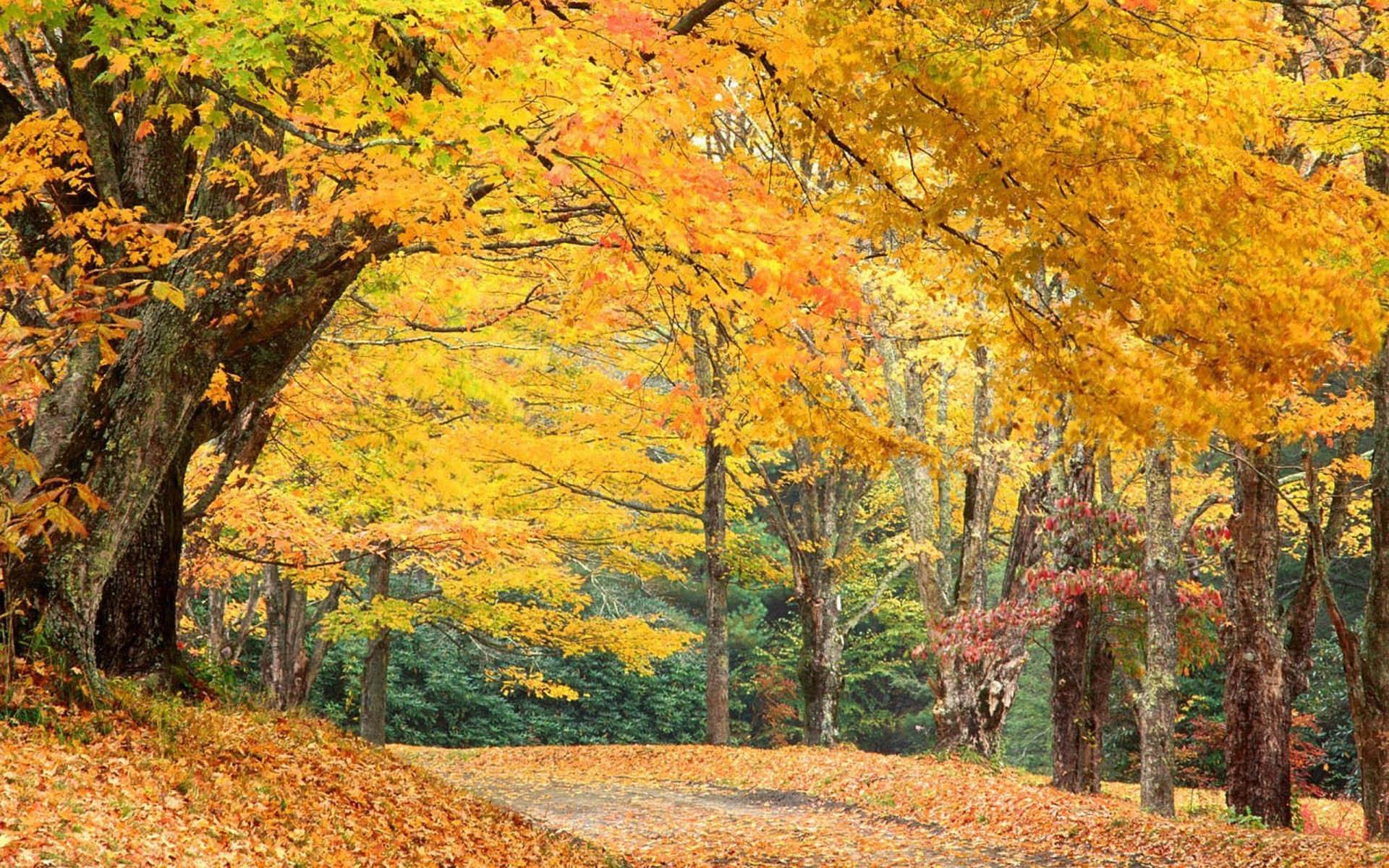 Autumn Scenes 1920x1200 Wallpapers 1920x1200 Wallpapers 1920x1200