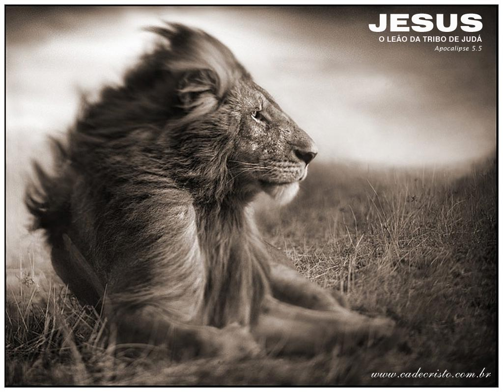 Free Download Jesus Lion Wallpaper Christian Wallpapers And