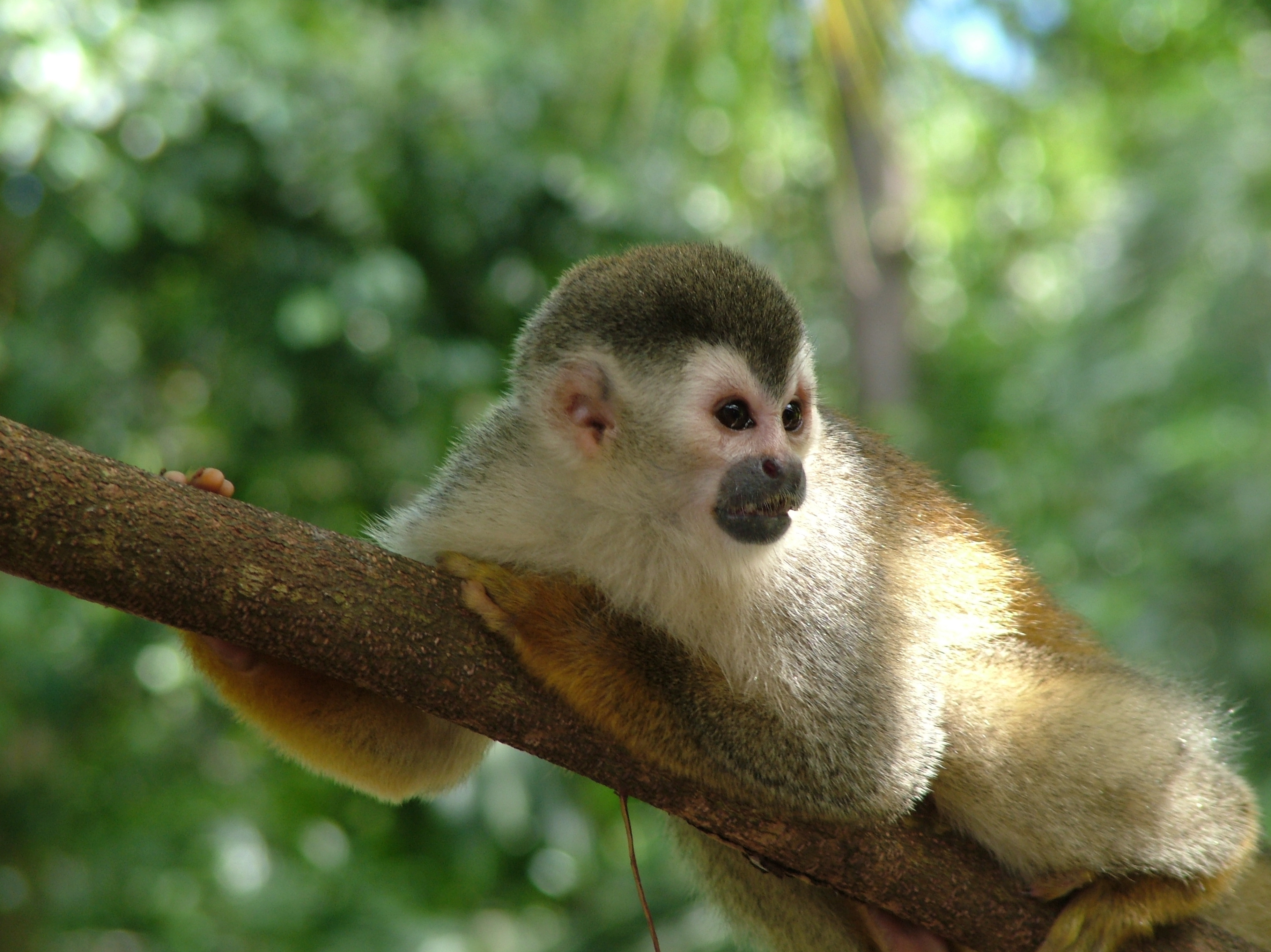 Cool wallpaper desk top wallpaper Monkey uncropped shot with 62 3985x2986
