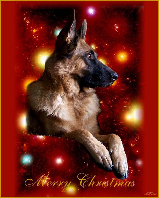 German Shepherd Christmas Cards